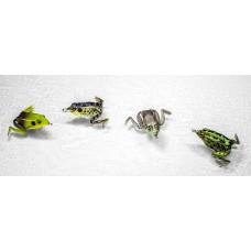 Pocket Frog Lunkerhunt